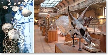 Galerie Paléontologie